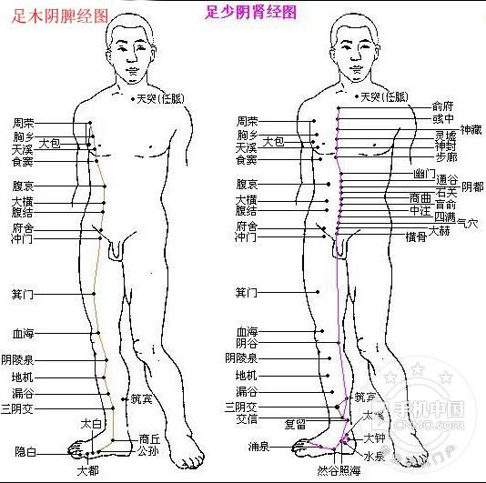 人体经络图解 身体经络图高清 12经络图解 十二经络穴位图